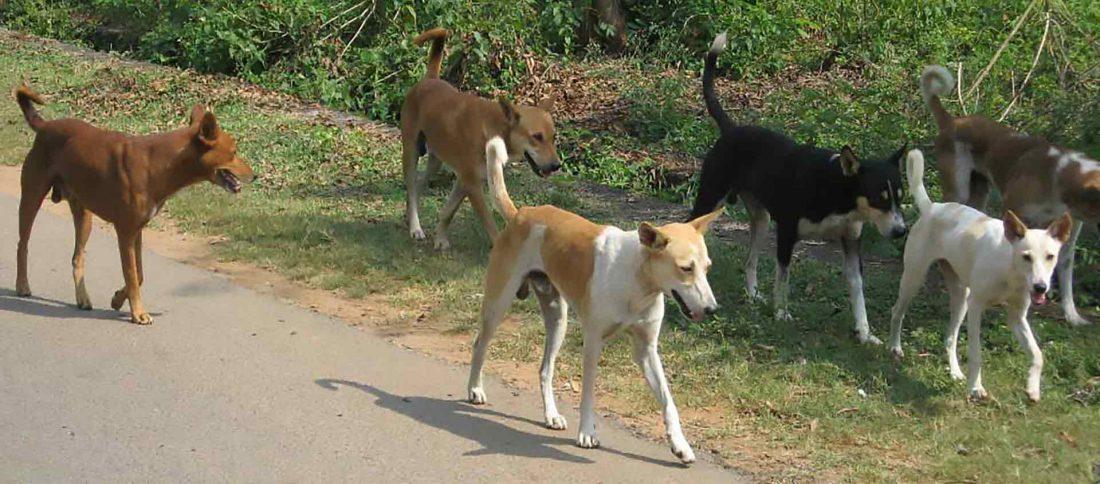 Herreløse hunde