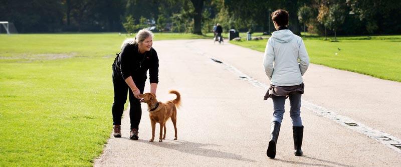 Hund med hensyn