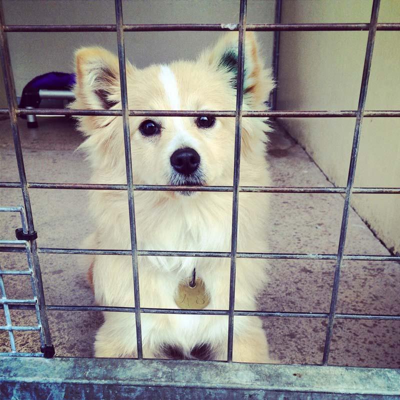 Lille hund i shelter