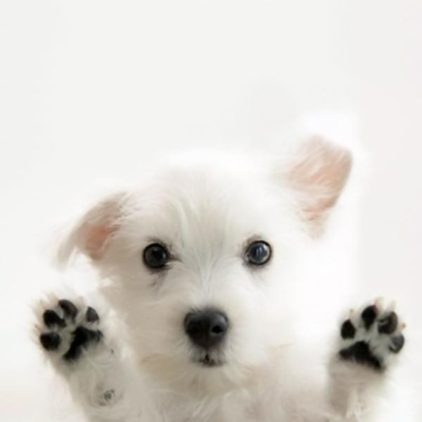 Sød hundehvalp