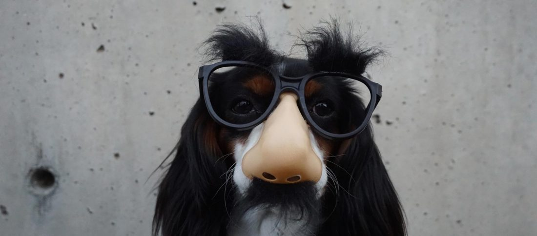 Hund med overskæg
