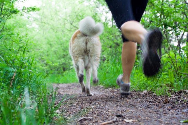 Hund og løber