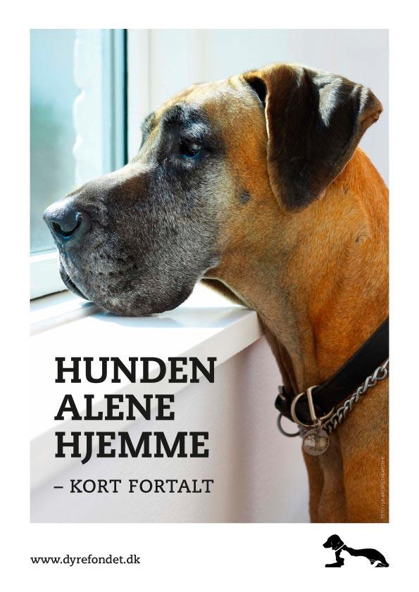 Hunden alene hjemme