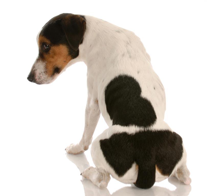 Myte om hunde #1